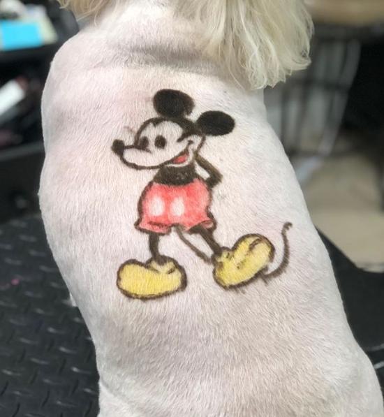 Katrina Short grooms a Mickey Mouse into a dog