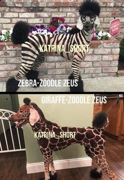 Katrina Short's dogs as a Zebra and a Giraffe