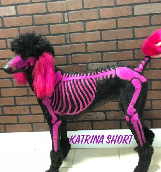 Katrina Short groomed a hot pink skeleton onto a dog