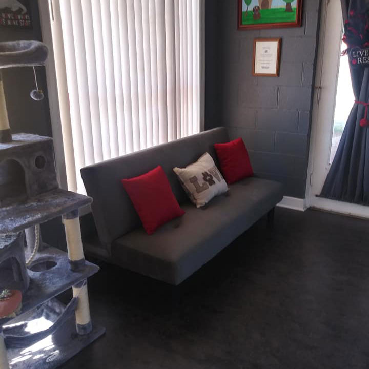 Couch and cat jungler of Woof Worx Pet Grooming