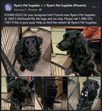 "Our initial Facebook post about finding ""Bruce"""