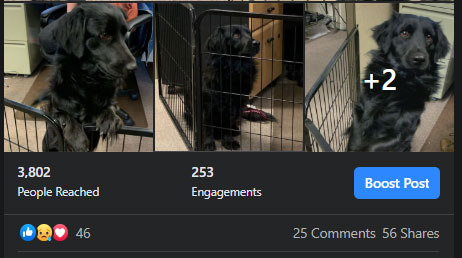 Stats on Facebook Post for Lost Dog