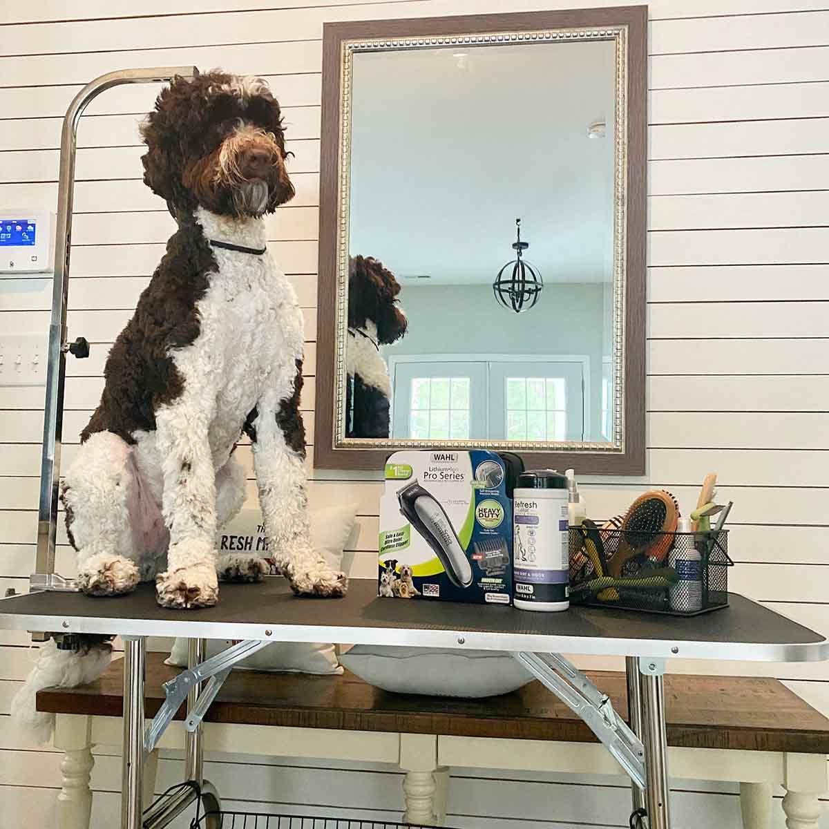 Luca getting groomed