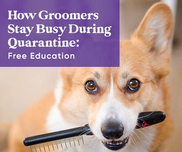 Free Education for Groomers during Quarantine