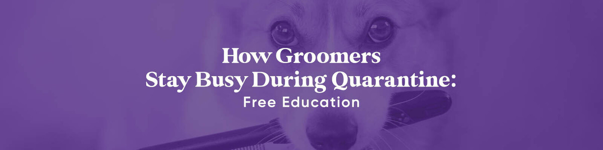 Free Groomer Classes and Certifications