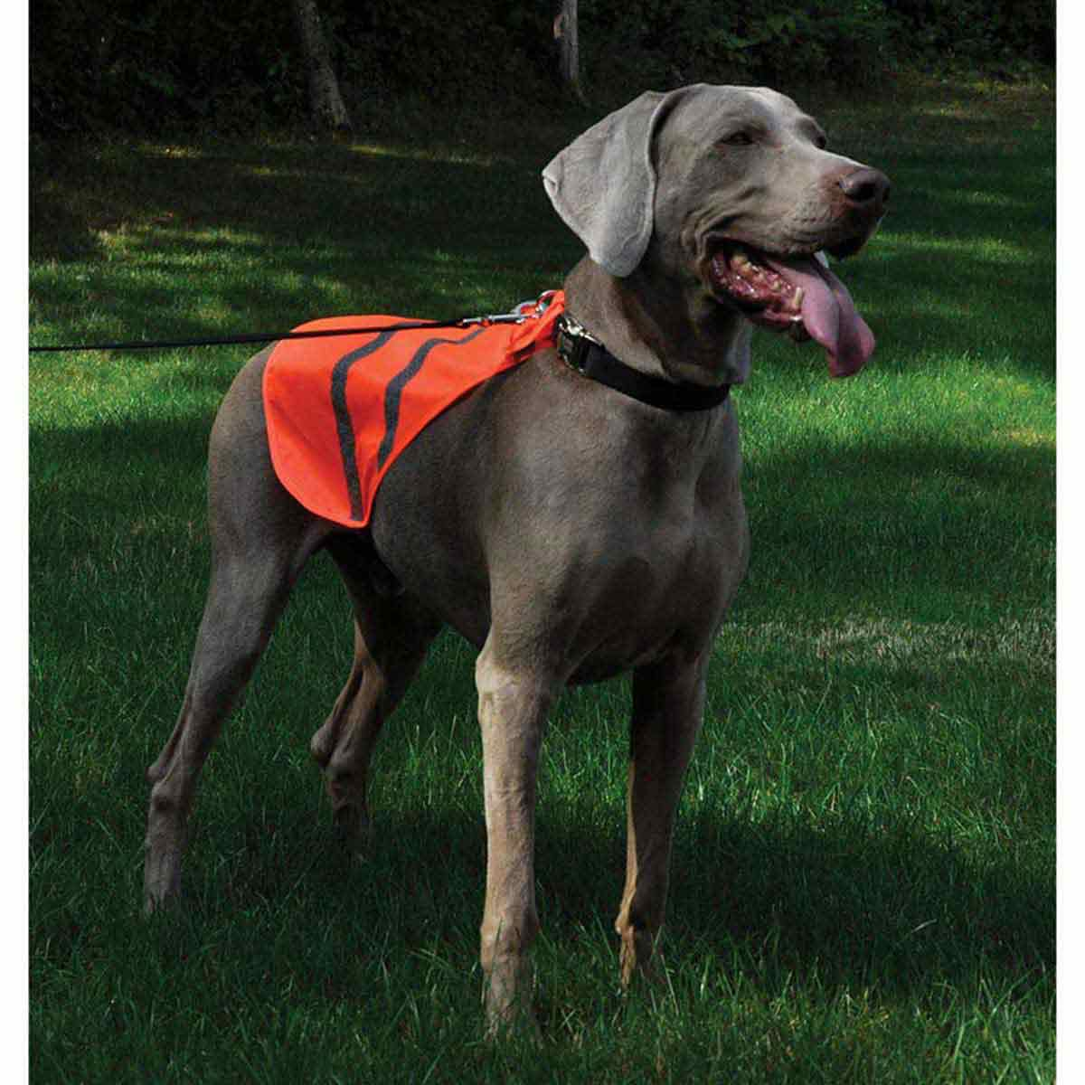 Coastal Reflective Orange Safety Vest for Small Dogs Up to 18 lbs