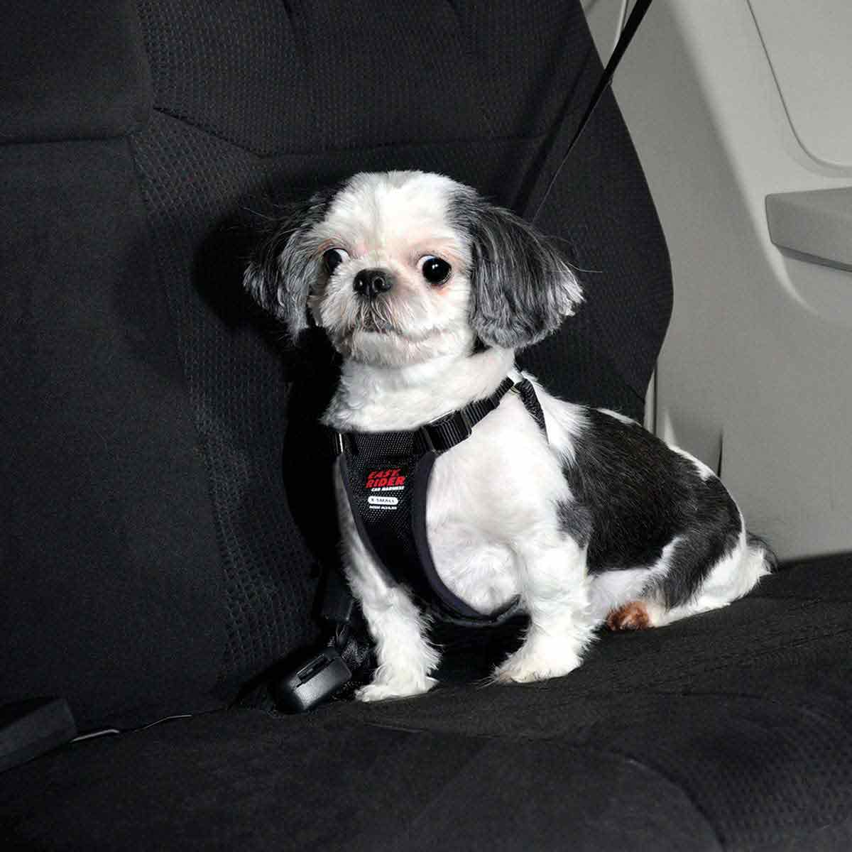Dog Wearing Coastal Easy Rider Car Harness for Xsmall Dogs