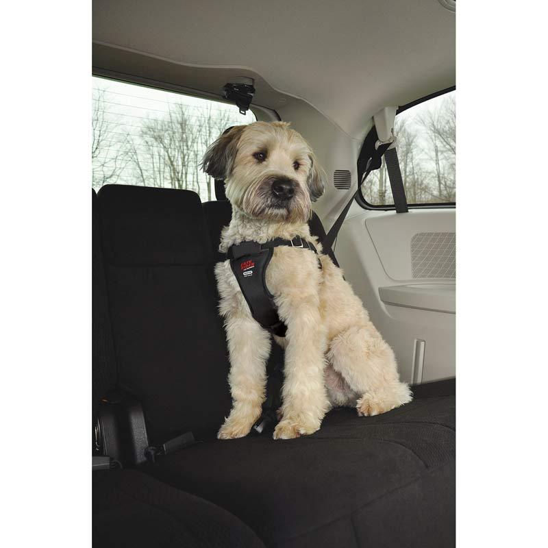 Dog Wearing Coastal Easy Rider Car Harness