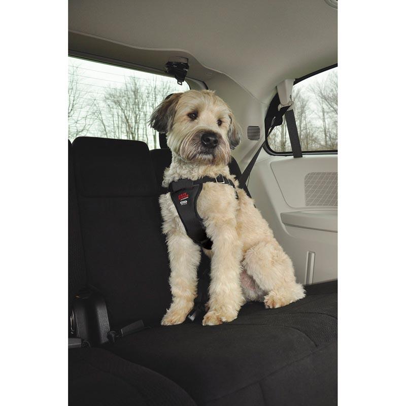 Medium Sized Dog Wearing Coastal Easy Rider Car Harness