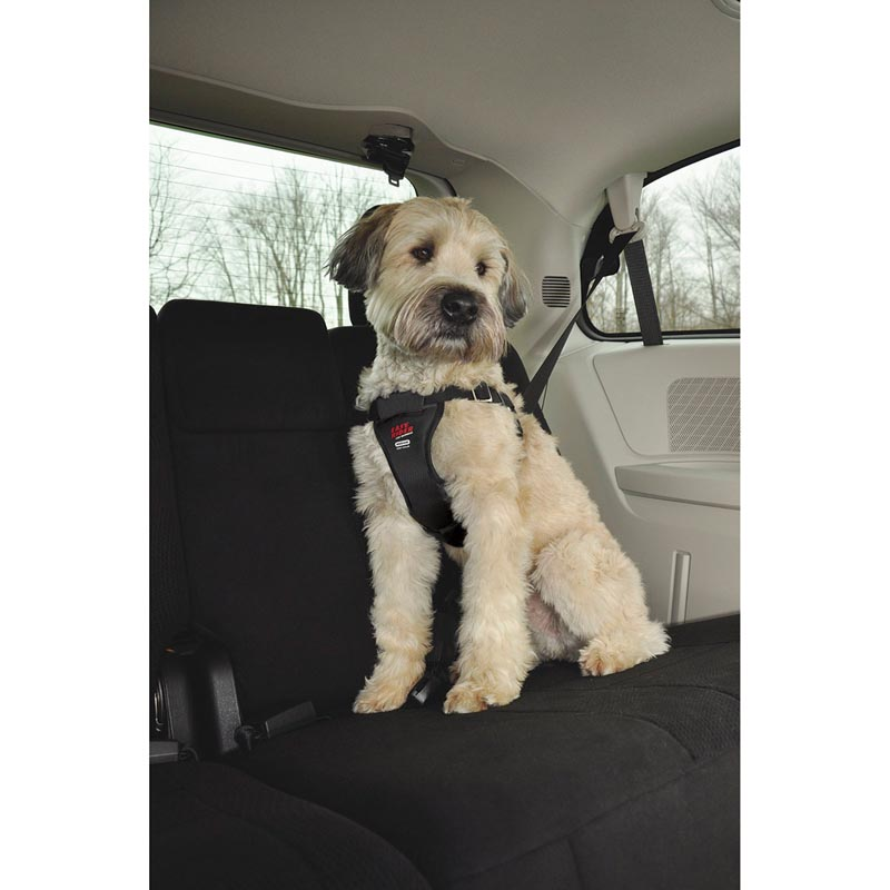 Dog in Back of Car wearing Coastal Easy Rider Car Harness Large