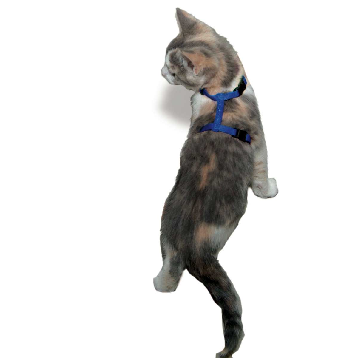 Cat Wearing Coastal Adjustable Cat Harness 3/8""