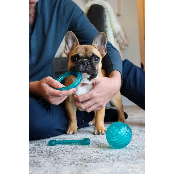 """Li'l Pals Antimicrobial 4"""" Ring for dogs and puppies"""