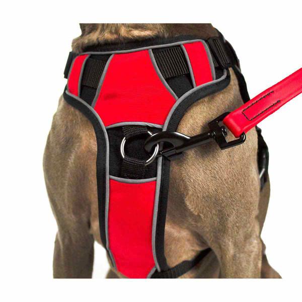 Leash linked to Medium Quest Multipurpose Dog Harness