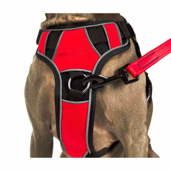 Red Leash hooked onto Large Quest Multipurpose Dog Harness