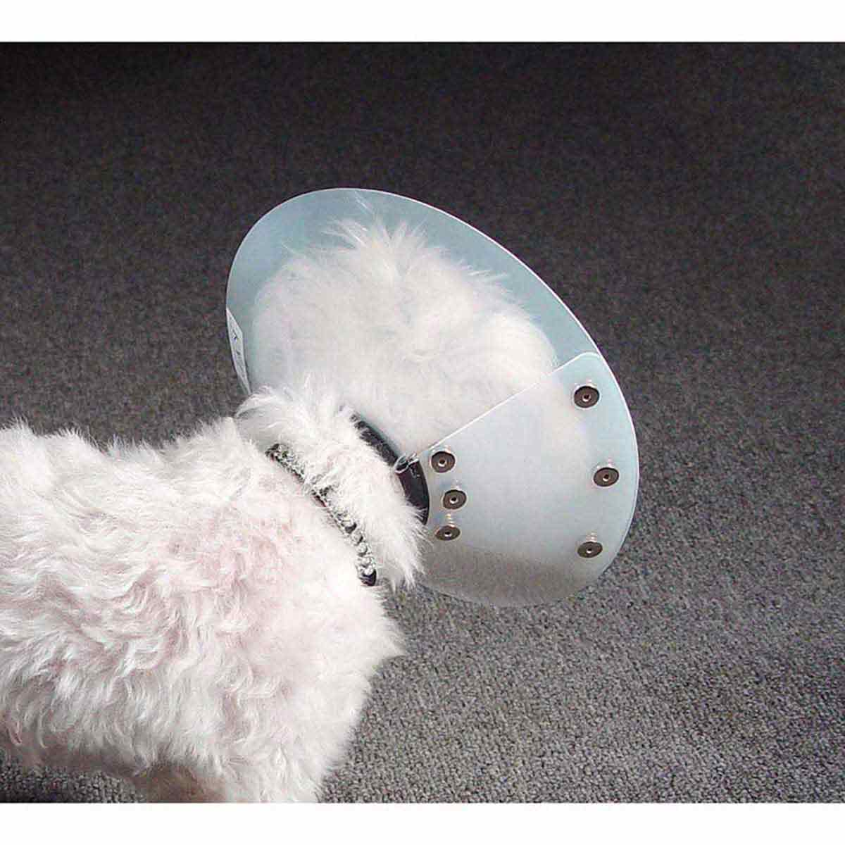 KVP Saf-T-Shield Elizabethan Collar - 13.75-18 inch Opening - View from Behind Dog