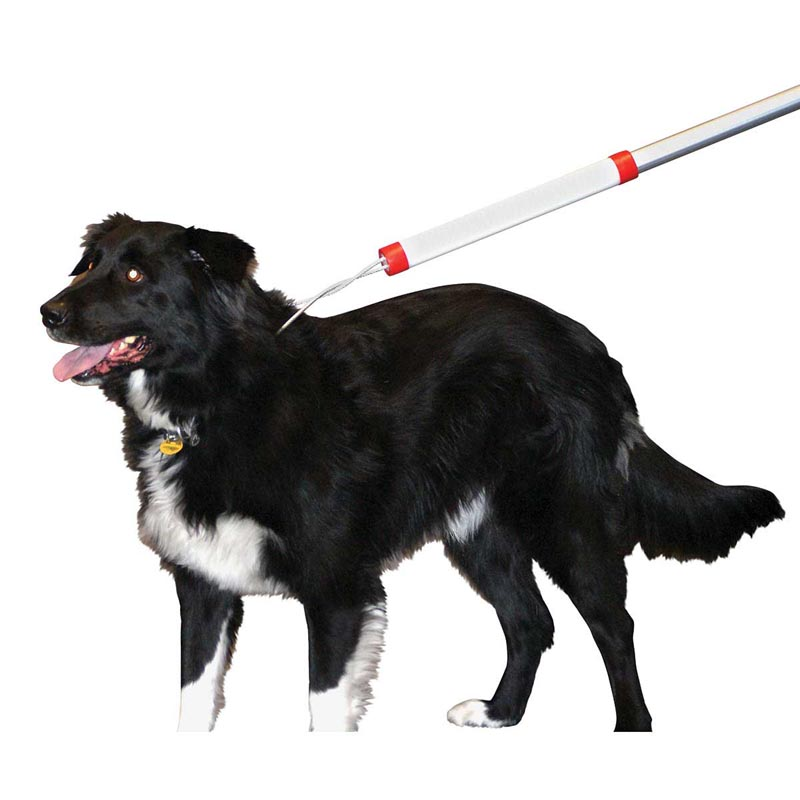 Using KVP 4 foot Snarem Pole to Collect a Dog