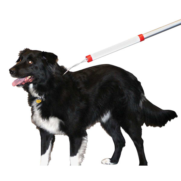 Dog being snared with KVP 6 foot Snarem Pole for Animal Rescue and Animal Control