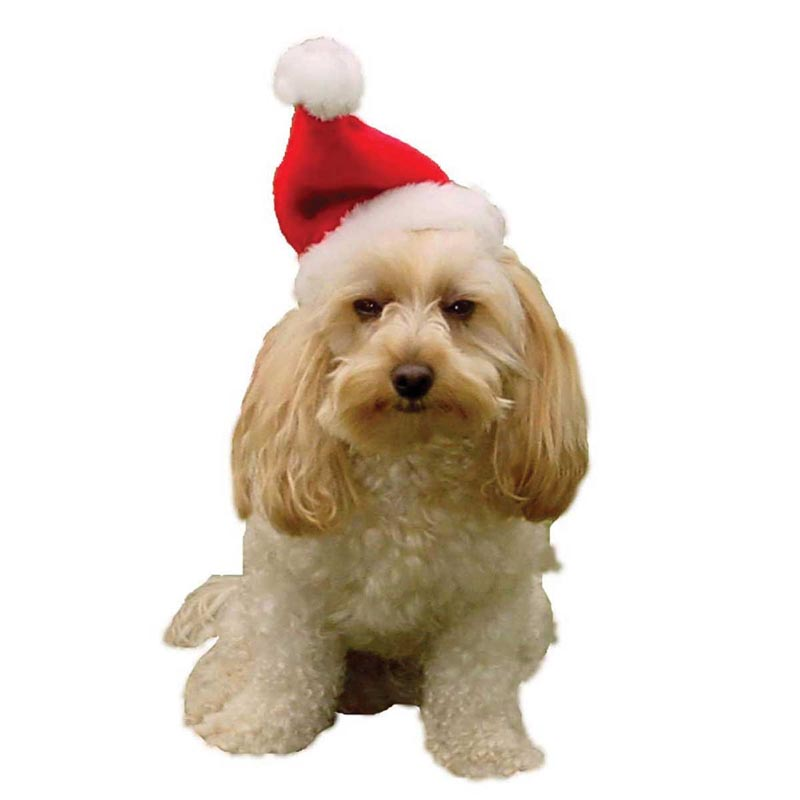 Dog wearing Outward Hound Small Santa Hat