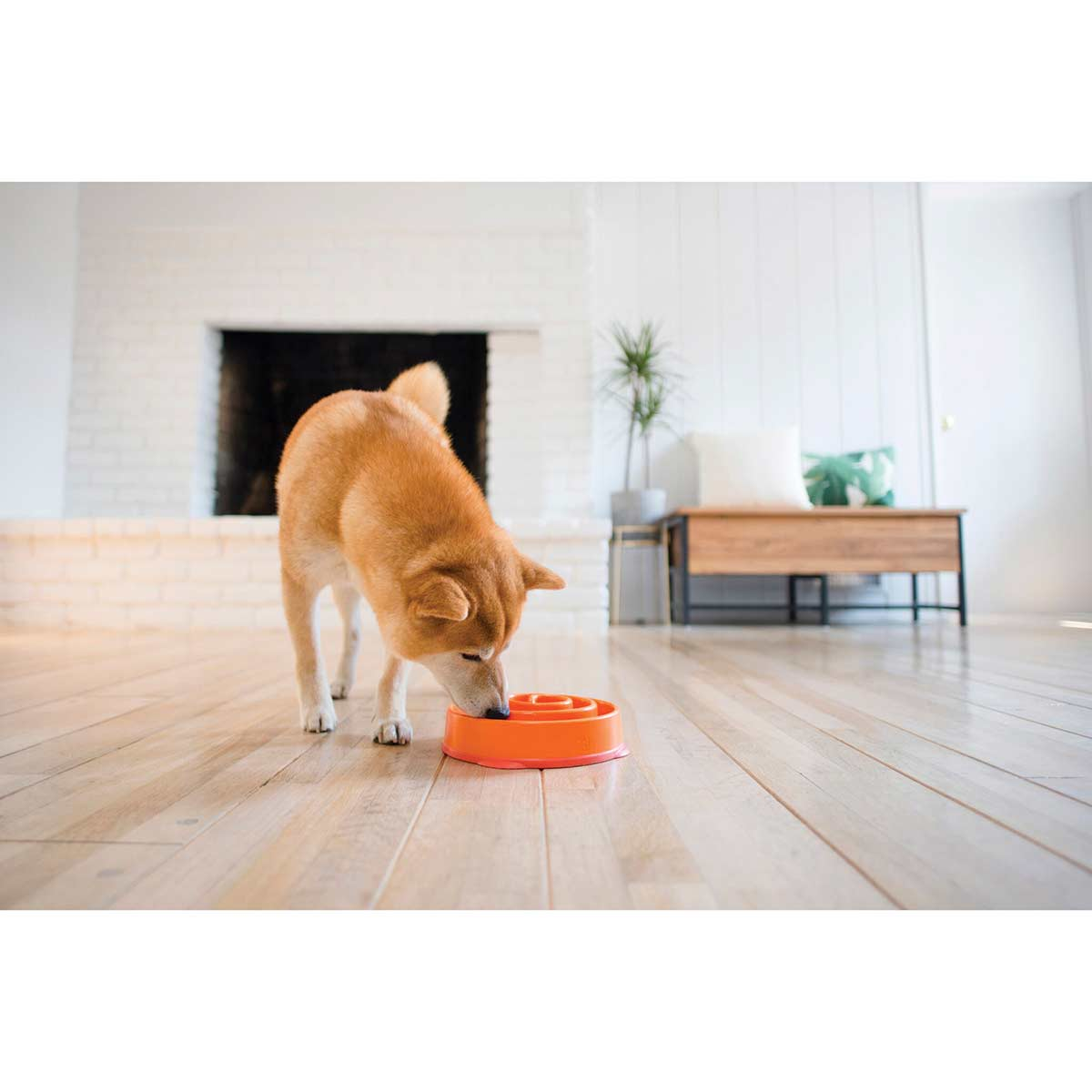 Dog eating with Outward Hound Slo-Bowl Coral Reg 12
