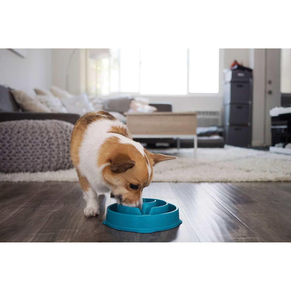 Dog using Outdoor Hound Slo-Bowl Drop Regular 12 inch