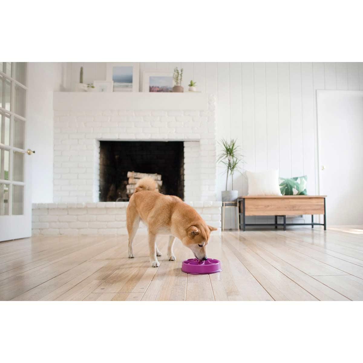 Dog eating out of Outward Hound Slo-Bowl Flower Regular 12 inch