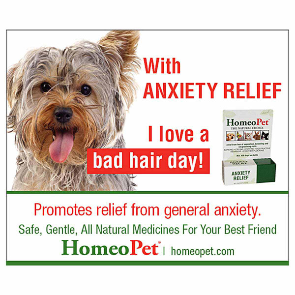 Promote relief from general anxiety with the HomeoPet Anxiety Relief pet supplement