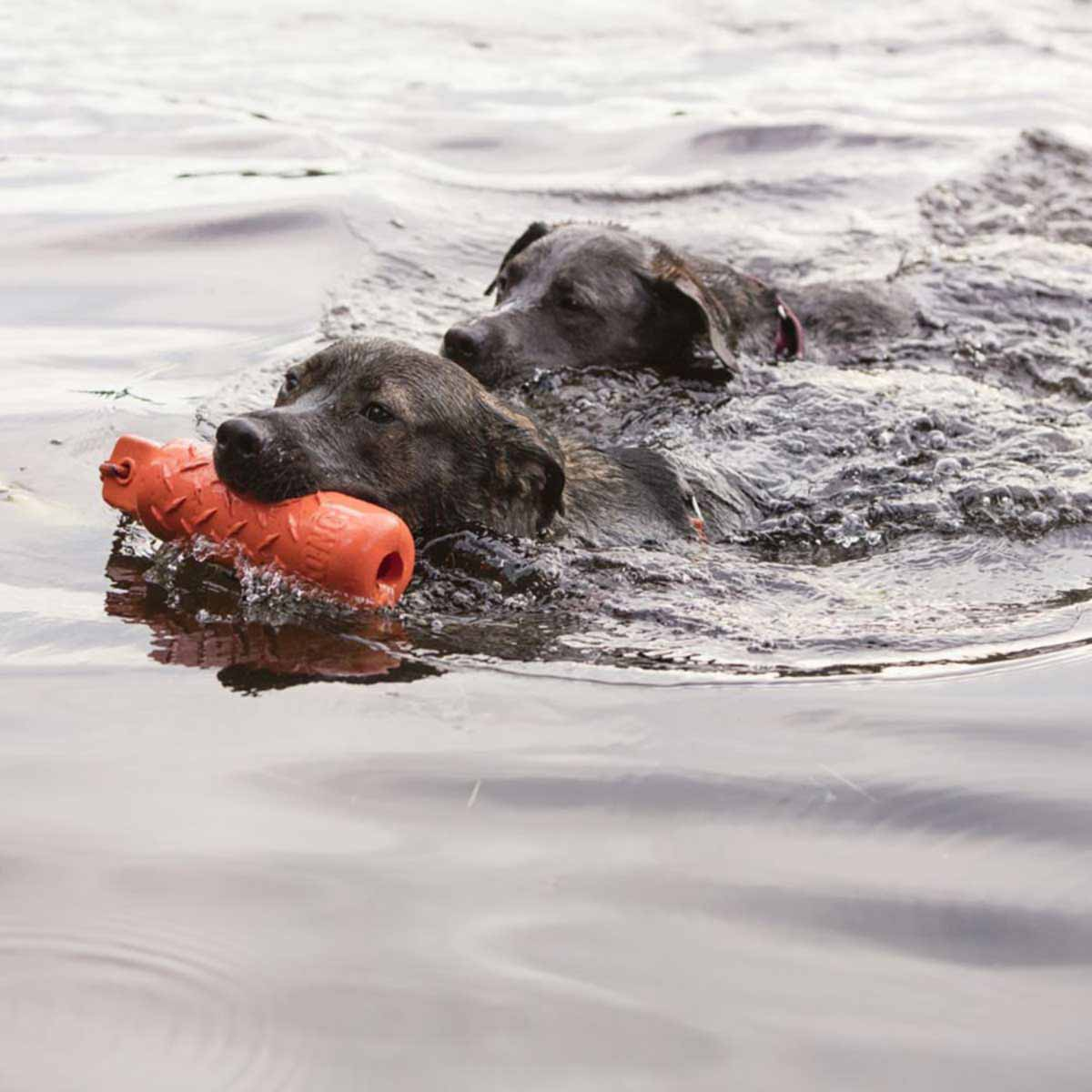 Two Dogs Swimming with Large KONG Training Dummy