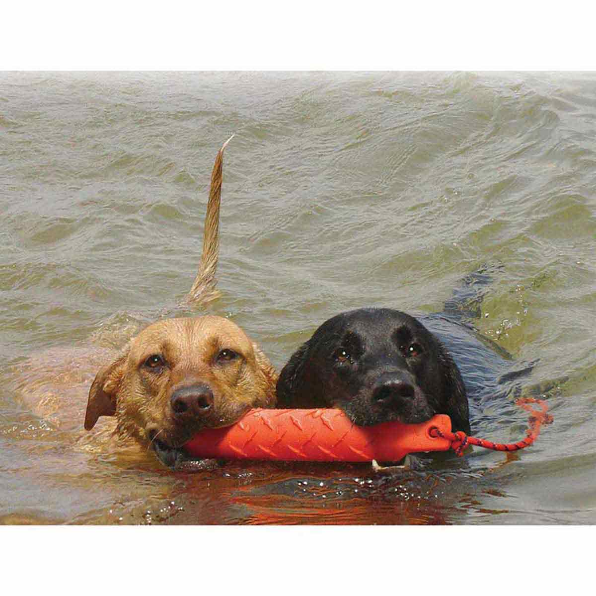 Two large dogs Swimming with KONG Training Dummy X-Large in their mouths