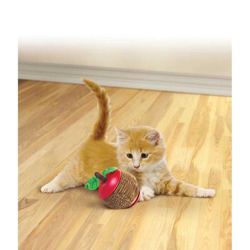 Kitten playing with KONG Scratch Apple Toy for Cats