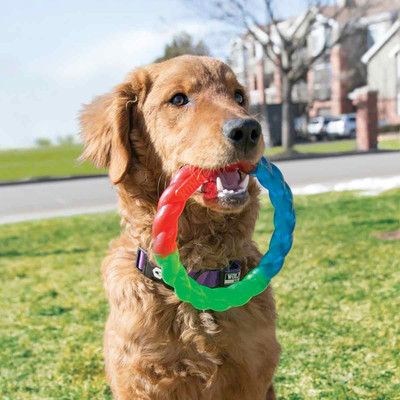 KONG Twistz Ring Large dog chew toy