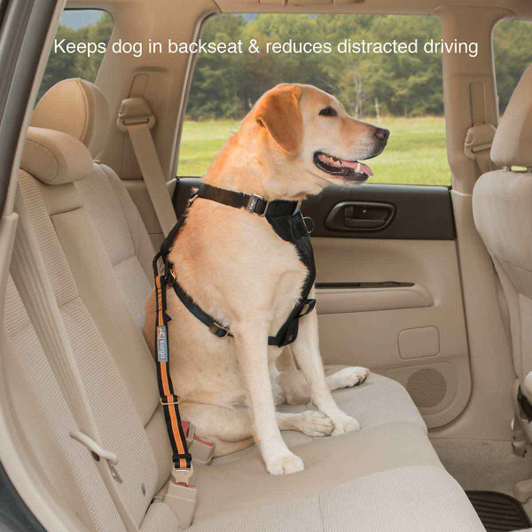 Keep dog in backseat and reduces distracted driving with the Black/Orange Kurgo Direct to Seatbelt Tether
