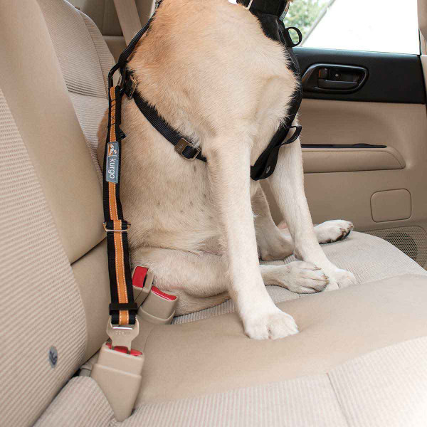 Dog sitting in back seat of car with the Kurgo Direct to Seatbelt Tether Black/Orange
