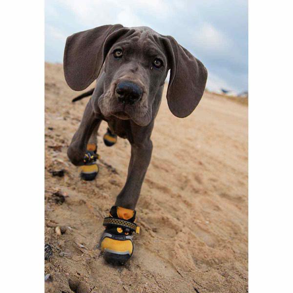 Dog walking on the sandy beach with XXS Orange Kurgo Step-n-Strobe Dog Shoe