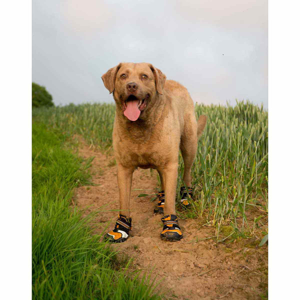 Doggo walking through the weeds in Medium Orange Kurgo Step-n-Strobe Dog Shoe
