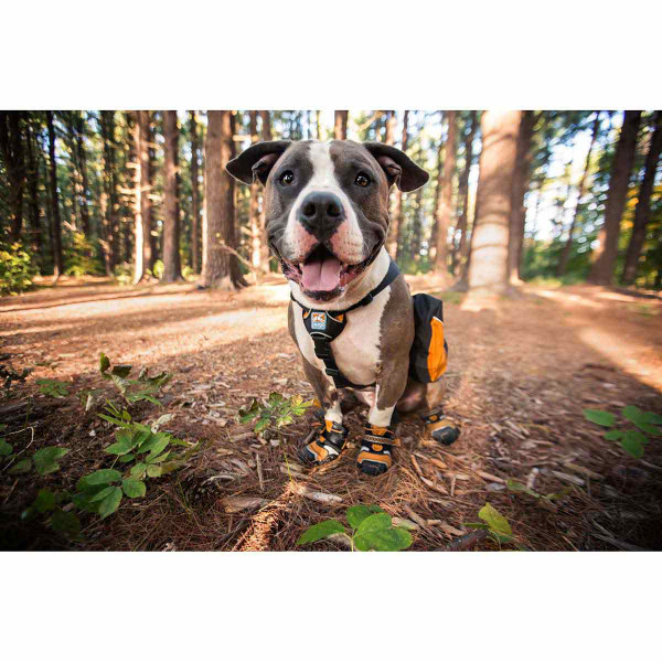 Smiling dog in the woods wearing Medium Orange Kurgo Step-n-Strobe Dog Shoe