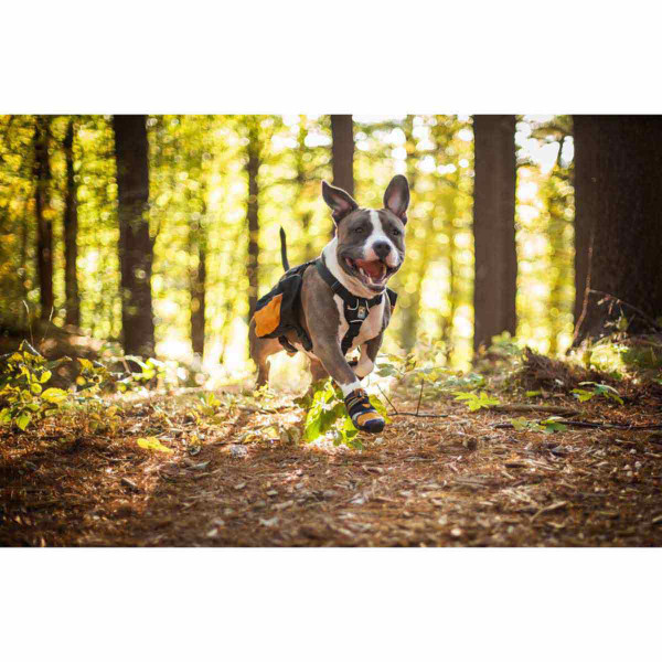 Smiling dog racing through the woods wearing Medium Orange Kurgo Step-n-Strobe Dog Shoe