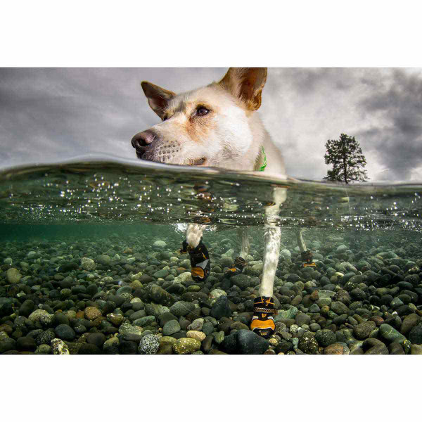 Dog floating through water and stepping on rocks with the XL Orange Kurgo Step-n-Strobe Dog Shoes