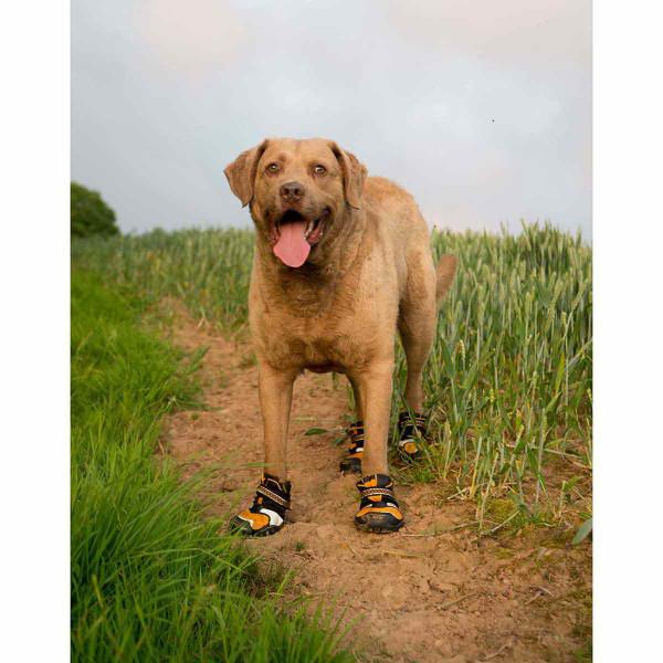 Happy dog walking on sandy trail in XL Orange Kurgo Step-n-Strobe Dog Shoes