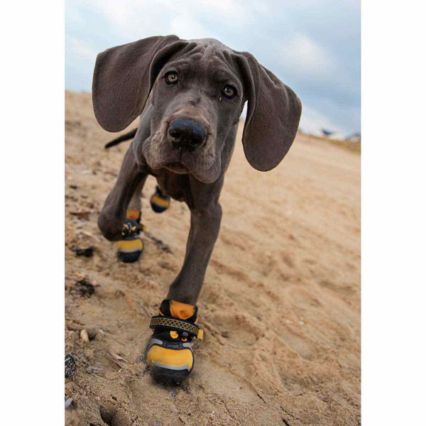 Dog hanging out on the beach wearing XL Orange Kurgo Step-n-Strobe Dog Shoes