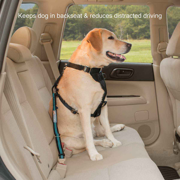 Reduce distracted driving and keep dog in the backseat with the Kurgo Direct to Seatbelt Tether - Coastal Blue