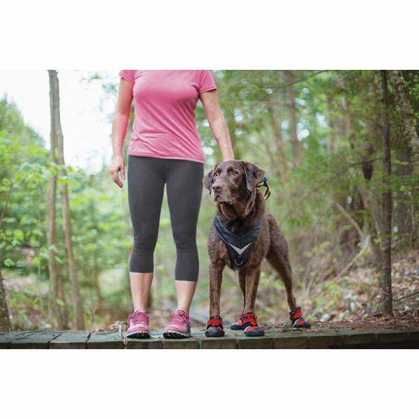 Dog standing on bridge in XS Chili Red Black Kurgo Blaze Cross Dog Shoes
