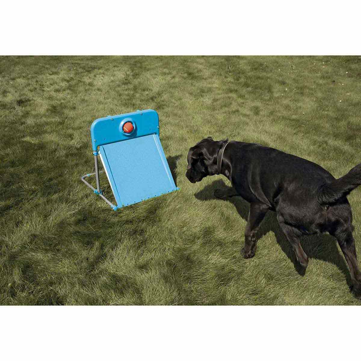 Fly Ball Training Equipment for Dogs