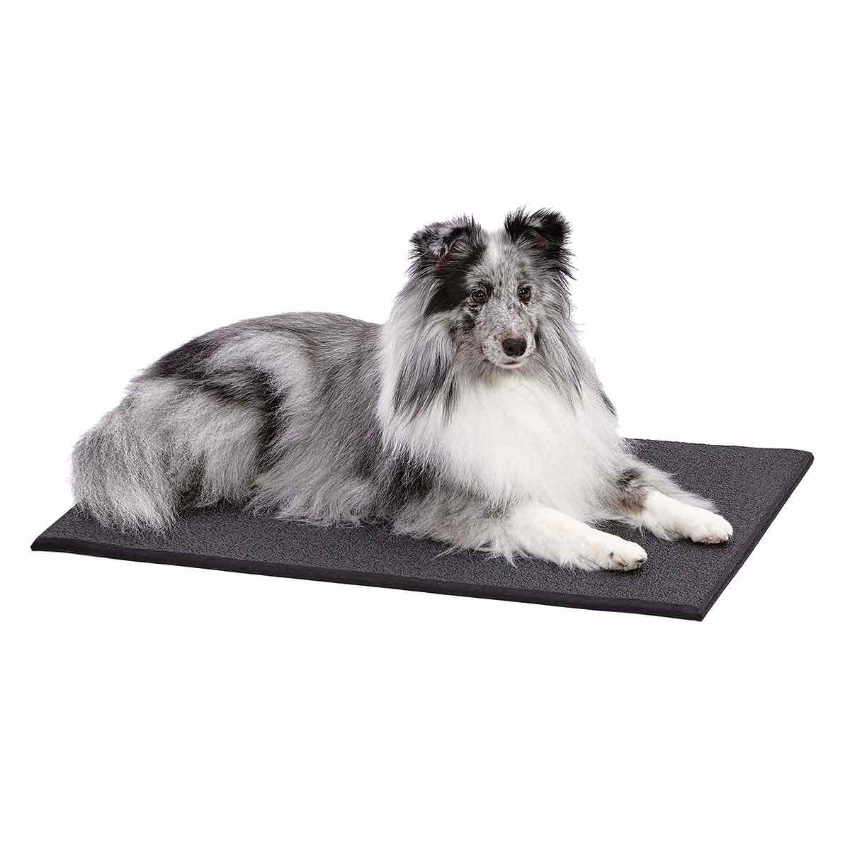 Pup sitting on Midwest Cushioned Crate Mat XXL