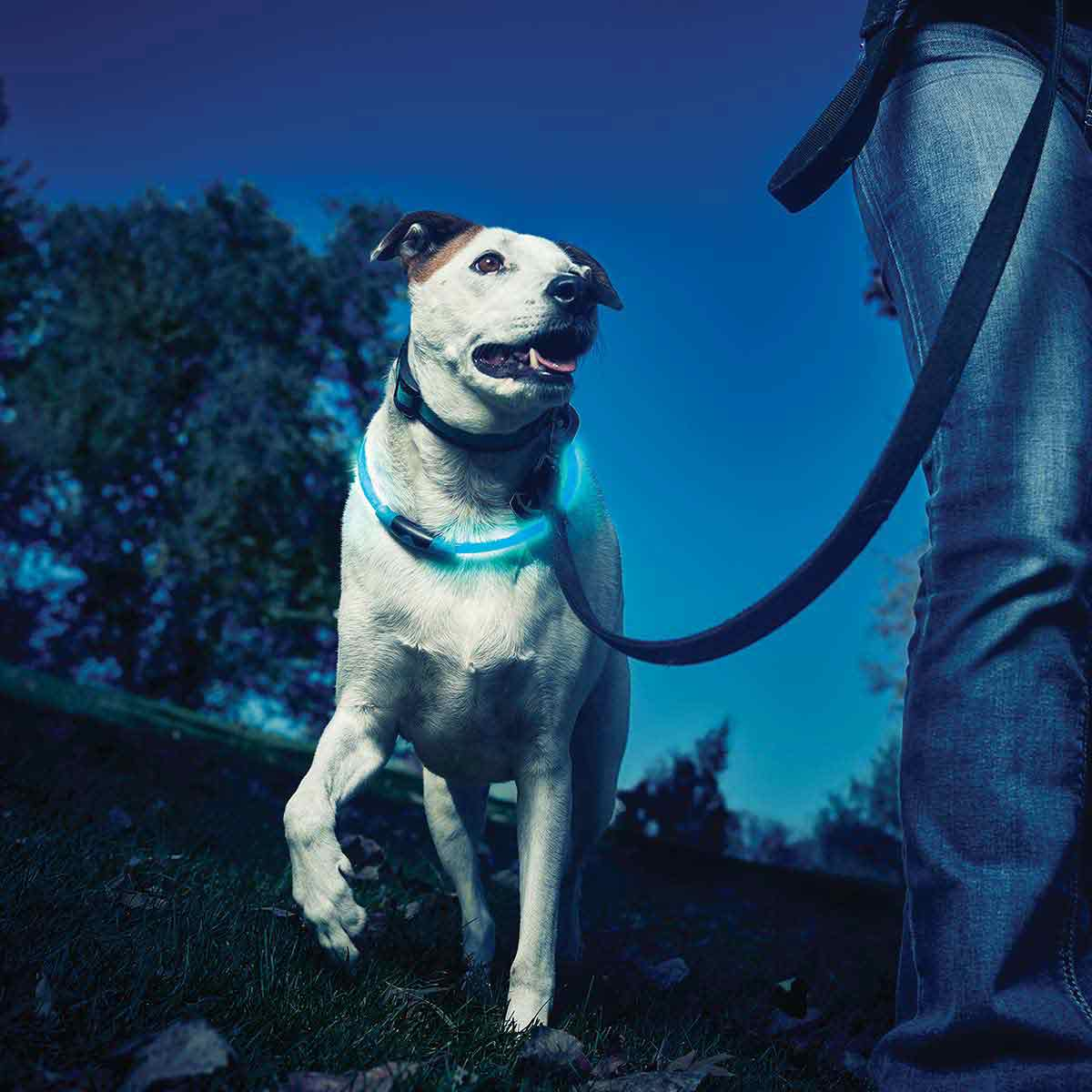 Nite Ize Nitehowl Blue LED Safety Necklace for Dogs at Night