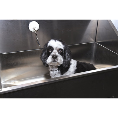 Adorable Dog in Grooming Tub with 30 inch Bath Restraint with Suction Cup