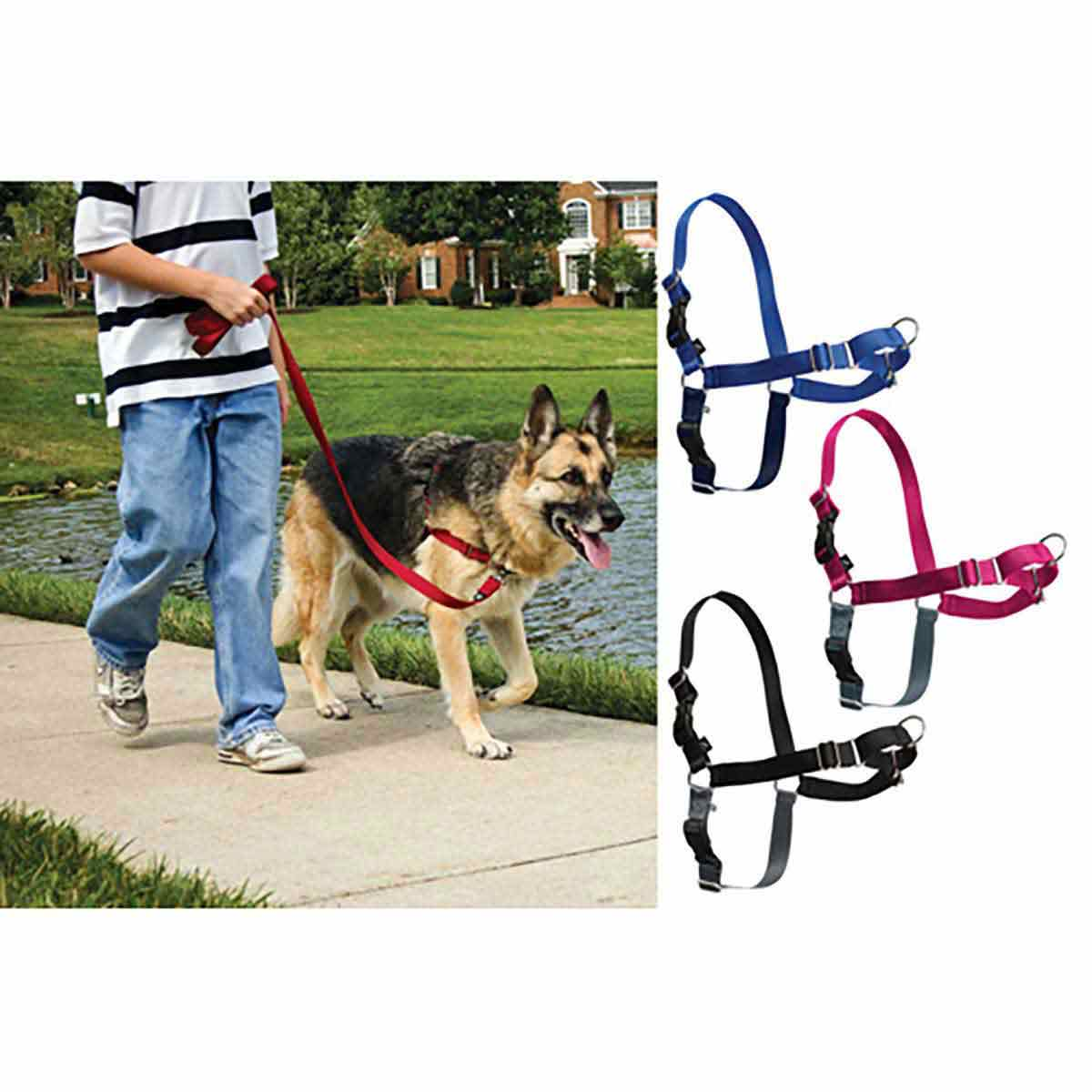 Easy Walk Medium Dog Harness 25 - 60 Lbs