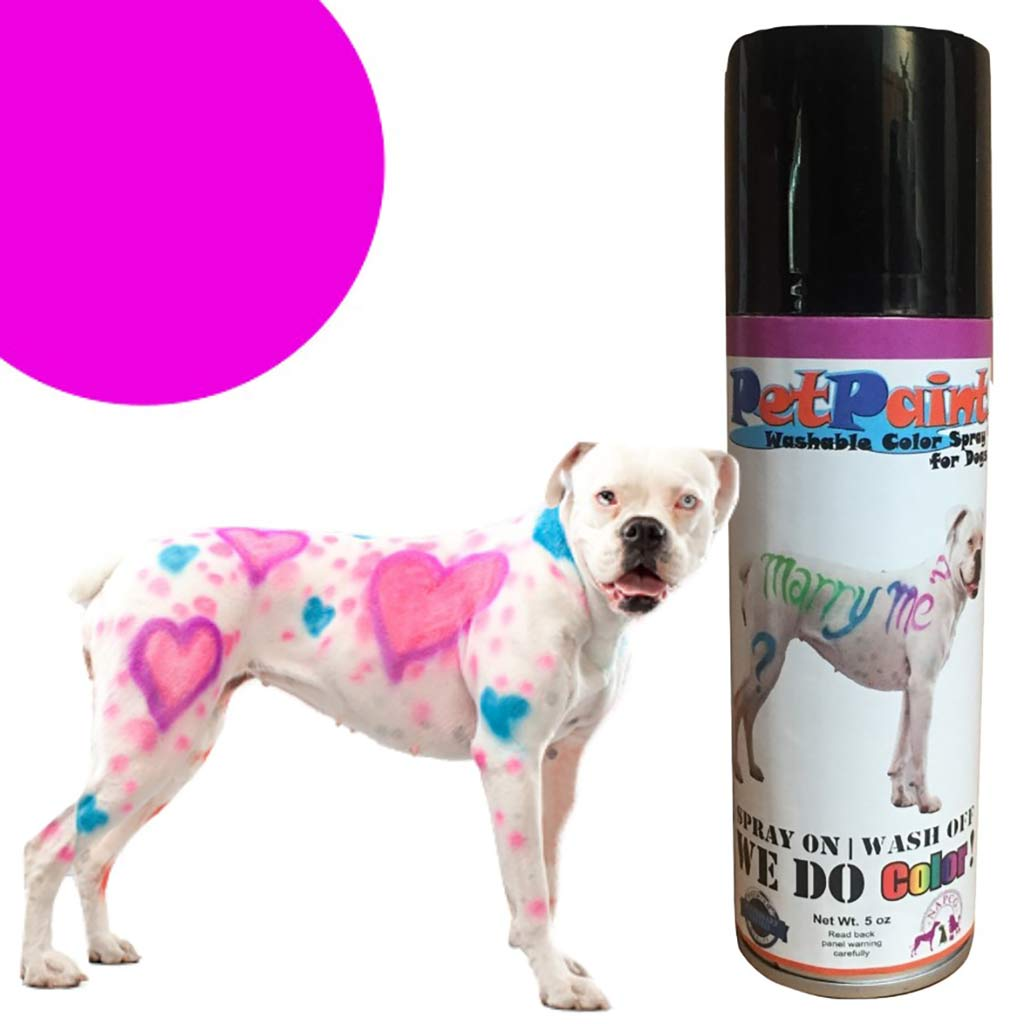 Pug Purple Colored Fur Spray Pet Paint