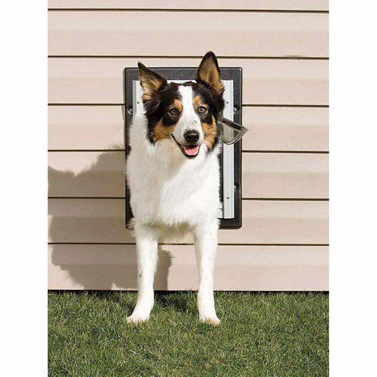 Doggo using Pet Safe Wall Entry Pet Door Medium