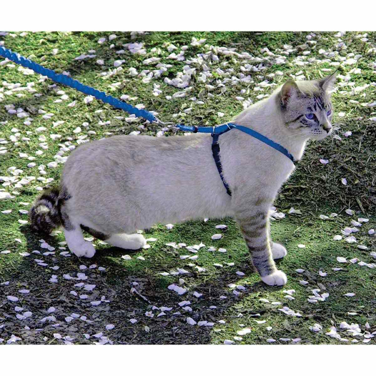 PetSafe Come With Me Kitty Harness and Bungee Leash Med Royal 10.5 inches - 14 inches
