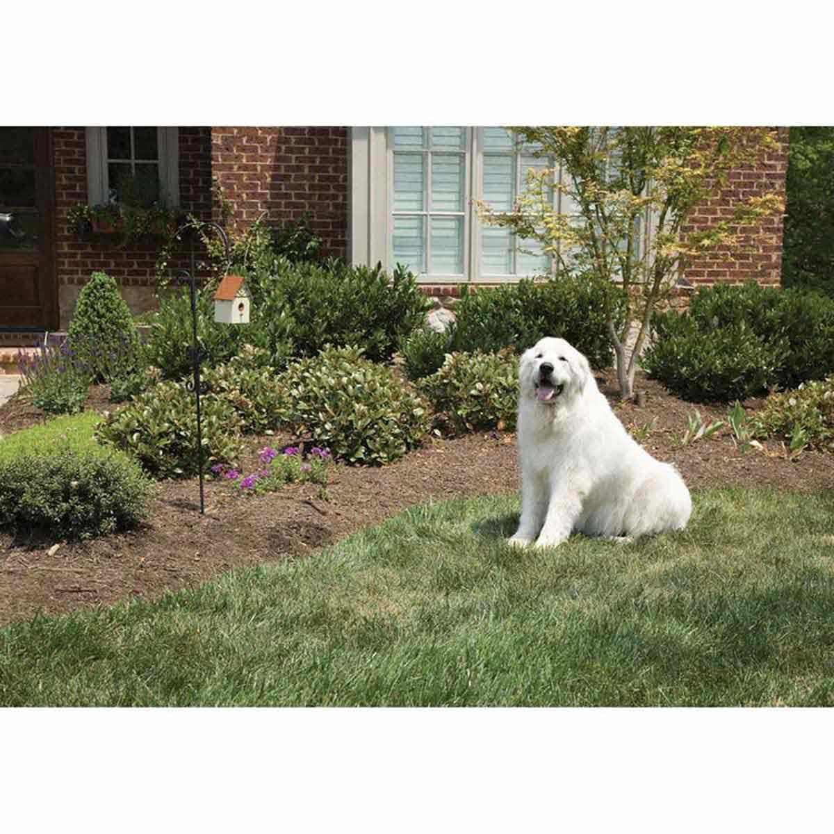 PetSafe Outdoor Bark Control Hanging on Hook and Dog Behaving